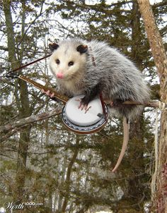 thats so possum!......(LOL possum pun!!!)