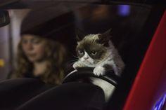 Grumpy Cat o Filme – Grumpy Cat's Worst Christmas Ever