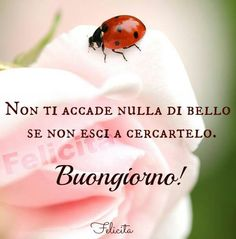 buongiorno Good Morning My Friend, Good Morning Good Night, Good Day, Cool Words, Wise Words, Italy Quotes, Spanish Quotes, Good Thoughts, Cute Quotes