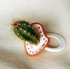 Tétine Cactus #commentbienpunirsonenfant