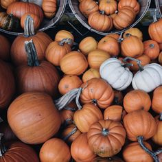 """The little white ones are my fave ☺️ #pumpkinseason"""