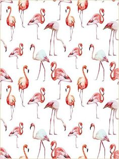 Kate Children Photography Backdrops,Red Crane Animal Backdrop For Children,For Baby Photo Studio Props Background For Photographers,Collapsible Seamless Backdrop