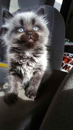 O gatinho que leva o Universo inteiro em seus olhos.