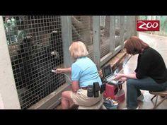 Gorilla Heart Health at the Columbus Zoo