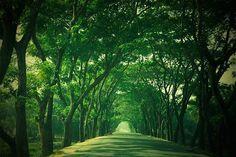 The Green Tunnel, Dhaka, Bangladesh.