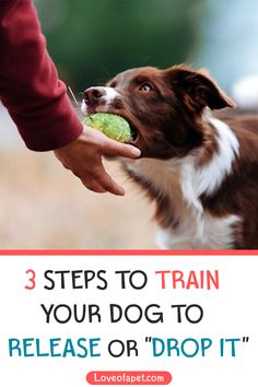 """How to Teach Your Dog the """"Drop It"""" Command: As a pet owner, having an idea of how to teach your dog the """"drop it"""" command is very important. This command is beneficial in so many ways. #DropItCommand  #DogCommands  #DogTrainingTips Training Your Puppy, Dog Training Tips, Training Pads, Dog Commands, Dog Health Tips, Dog Games, Dog Owners, Dog Love, Pet Dogs"""