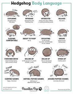 Hedgehog Names, Hedgehog Book, Hedgehog Drawing, Hedgehog House, Baby Hedgehog, Hedgehog In Garden, Pygmy Hedgehog Cage, Animal Facts, Animal Memes