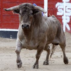 Toro de Lidia.