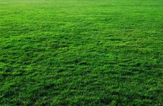 thick free grass texture or green lawn background photo image