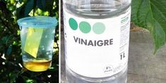 If you use vinegar in your garden, these 13 miracles will happen! Cinnamon Cream Cheese Frosting, Cinnamon Cream Cheeses, Insecticide, Black Sesame Ice Cream, Cake Games, Miracle, Fox Cookies, Pumpkin Spice Cupcakes, Bear Cakes