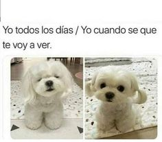 Animal Jokes, Funny Animal Memes, Dog Memes, Funny Animal Pictures, Cute Funny Animals, Stupid Funny Memes, Cute Baby Animals, Funny Cute, Funny Dogs