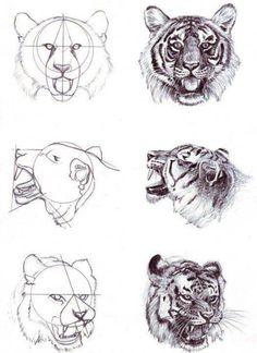 como dibujar caras o rostros de animales