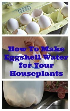 Did you know that you could make eggshell water for houseplants and have your own organic plant food? You only need 3 things, eggshells, water and a container. I'm certain you have all three of those items available right now. Fertilizer For Plants, Organic Fertilizer, Household Plants, Organic Gardening Tips, Indoor Gardening, Container Gardening, Pot Plante, Plant Information, Organic Vegetables