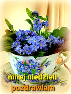 Kittens Cutest, Good Morning, Planter Pots, Fotografia, Text Posts, Jokes, Buen Dia, Bonjour, Good Morning Wishes