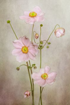 Explore Mandy Disher photos on Flickr. Mandy Disher has uploaded 1095 photos to Flickr.