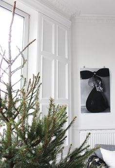 The Tree | Post by Ollie & Sebs Haus