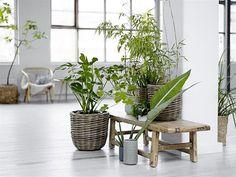 decorar con plantas bloomingville ambiente