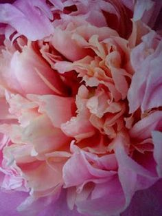 Peonies were used in the middle ages to ward off evil spirits and to reduce the pain of childbirth.