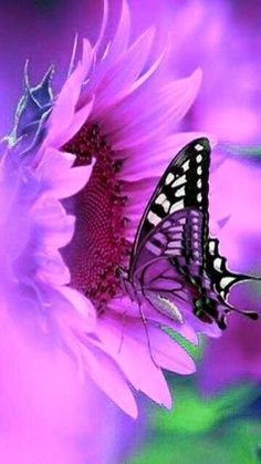You are as amazing as you let yourself be. Most Beautiful Butterfly, Life Is Beautiful, Beautiful Images, Beautiful Flowers, Butterfly Kisses, Butterfly Flowers, Flowers Nature, Flower Phone Wallpaper, Butterfly Wallpaper