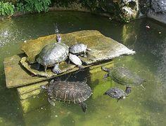 Turtle House.