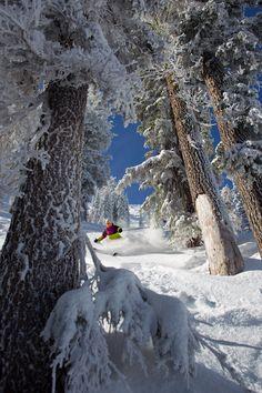 Tree skiing at Alpine Meadows