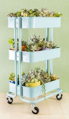 How to Plant a Succulent Garden in an Ikea Cart