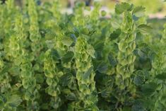 Succession Planting: How To Keep The Harvest Going All Season Long - Floret Flowers Growing Greens, Growing Flowers, Cut Flowers, Succession Planting, Gardens Of The World, Market Garden, Farm Stand, Foliage Plants, Flower Farm