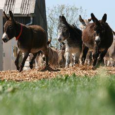 Oh my god. Please someone buy me a donkey.