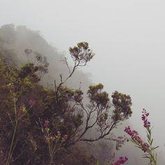 The fog