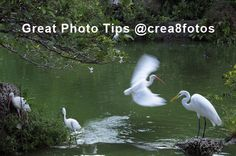 Learn to photograph Like a pro @crea8fotos