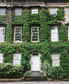 pretty ivy covered walls