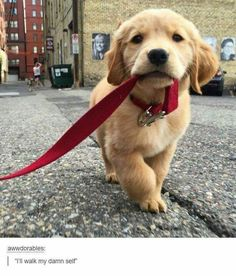Don't touch my leash because its my leash grrr