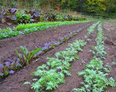 A Veggie Venture: Vegetable Recipes for CSA Shareholders