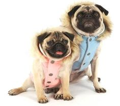 My friend Vern's dogs would look good in these- Dog Clothes, Dog Accessories