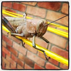 Whoa! Awesome entry to our #pbmobile photo contest from stayathomelife@Instagram -- Grass Hopper