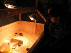 Instructions for the quail brooder. http://www.backyardchickens.com/a/amferro103s-homemade-chicken-brooder