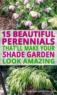 Looking for perennial ground cover plants that will thrive in your shade garden? This list of easy to grow flowering perennials is perfect for shady landscaping.   Shade Perennials Gardening For Beginners, Gardening Tips, Container Gardening, Gardening Websites, Gardening Quotes, Part Shade Perennials, Sun Perennials, Perennial Flowers For Shade, Groundcover For Shade