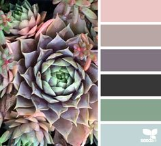 Succulent Hues - http://design-seeds.com/index.php/home/entry/succulent-hues24