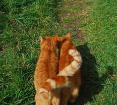 Ginger cats oan a lumber I Love Cats, Crazy Cats, Cool Cats, Fluffy Animals, Baby Animals, Colorfull Wallpaper, Cat Aesthetic, Orange Cats, Tier Fotos
