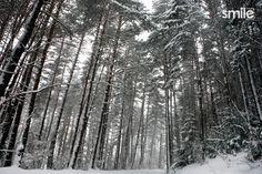 Árboles nevados por Smile Estudio