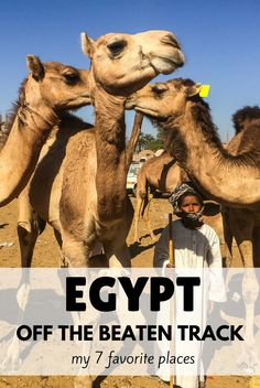 Would you like to experience Egypt off the beaten track? In this article, I am going to show you 7 of my favorite unusual places Egypt Travel, Africa Travel, Egypt Tourism, East Africa, North Africa, Egypt Culture, Africa Destinations, Travel Destinations, Les Continents
