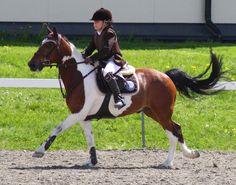 Смешные Лошади, Красивые Лошади, Фото С Лошадьми, Детская Фотография, Знак Зодиака Овен, Любовь Лошадей, Лошади, Собаки