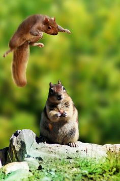 This reminds me of Scrat from Ice Age trying to get his acorn from that one girl squirrel.