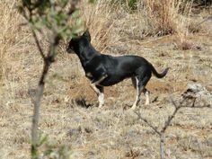 colleague farm patrol Goats, Photos, Animals, Pictures, Animales, Animaux, Photographs, Animal, Animais