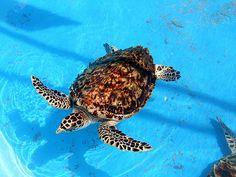 turtle farm on isla mujeres