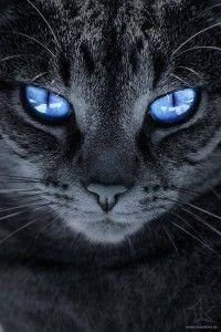 Lindos Olhos