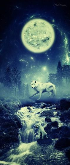 wolf moon  Get Informed with Worthy Readings. http://www.dailynewsmag.com