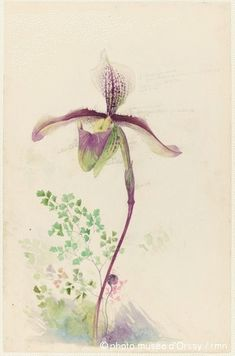 Emile Gallé: Study of Lady's Slipper (Cypripedium) for a glass inlay, circa 1897. Pencil and watercolor. H: 49.4cm, W: 32cm. Musée d'Orsay