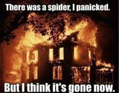This is about right...my reaction when I see a spider!