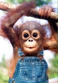 No other primate looks at you the way how an orang utan does.oh so cute! =) You can see it at Sepilok Orang Utan Rehabilitation Centre, Sandakan, Sabah, Malaysia. Cute Creatures, Beautiful Creatures, Animals Beautiful, Funny Babies, Cute Babies, Baby Orangutan, Cute Little Animals, Adorable Baby Animals, Tier Fotos
